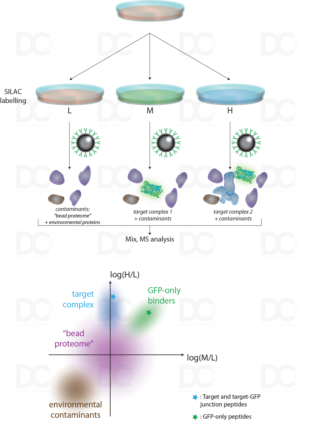 GFP_SILAC_co-IPs