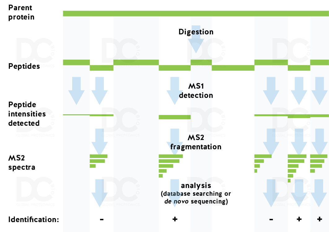MS from protein to peptide detection and quantitation