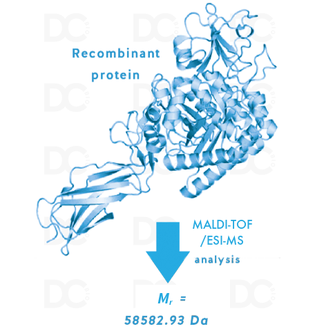 Intact Protein Mass