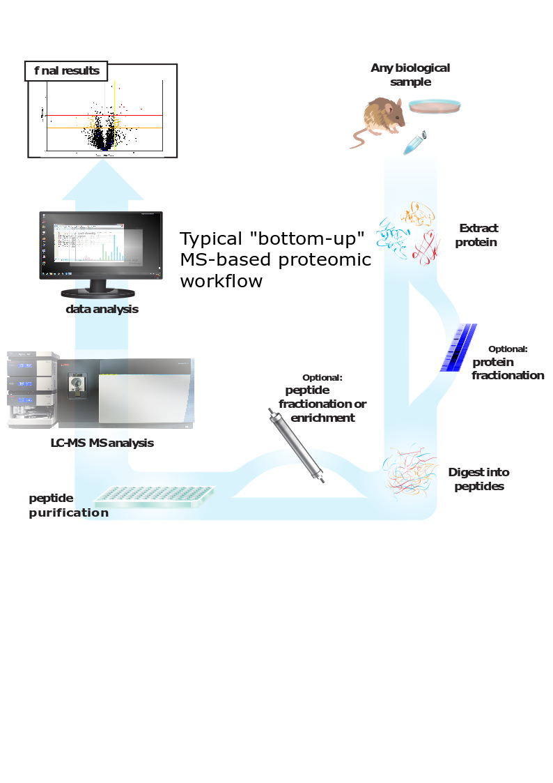 MS based proteomic workflow